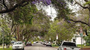 A street scene in West Los Angeles with trees